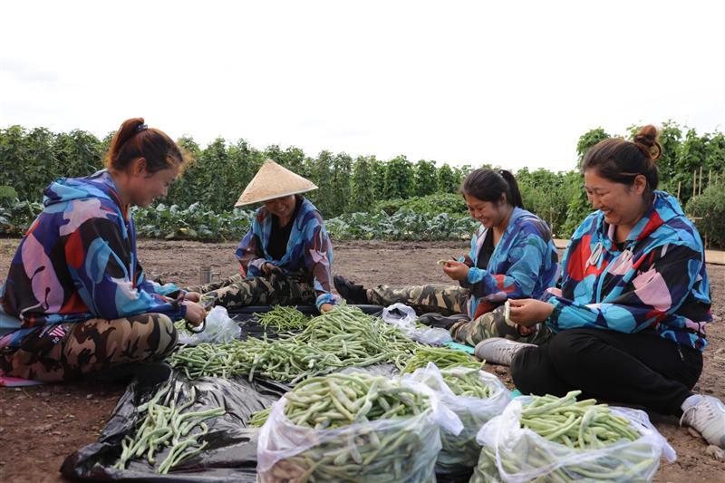 內蒙古興安農墾呼和馬場凝聚巾幗力量 助推鄉村產業發展