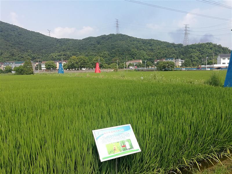 """浙江:水稻病虫害防控主抓""""绿色"""""""