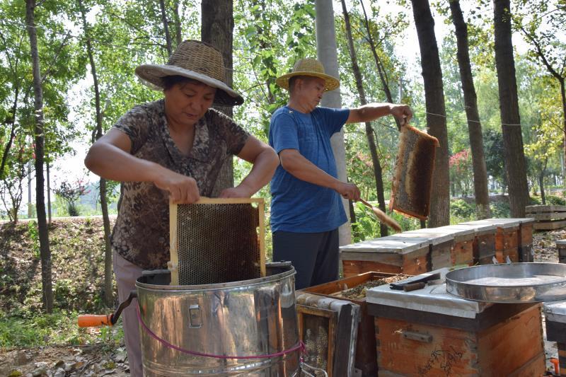追花采蜜 甜美人生——记河南平舆县挚都养蜂专业合作社致富带头人娄莲珠