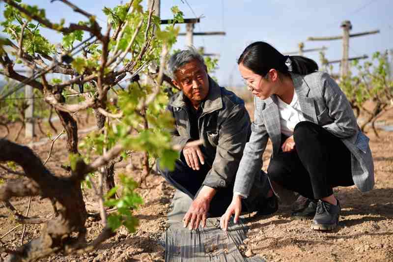 探訪西北農林科技大學葡萄酒學院