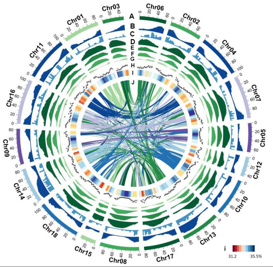 我國科學家獲得首個染色體級別橡膠樹參考基因組圖譜1276.png
