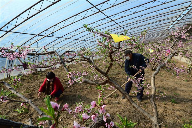 京郊合作社果蔬產銷旺
