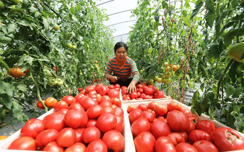 ?贵州赤水:党建扶贫促增收