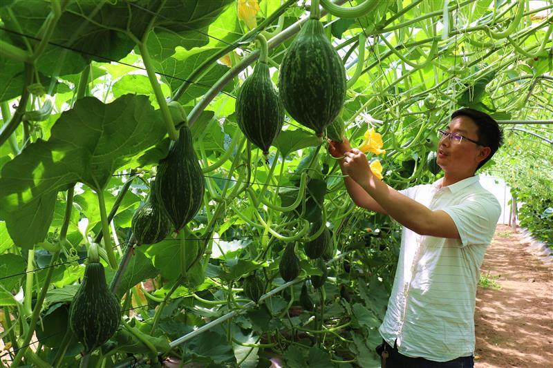 蔬菜新品助脱贫