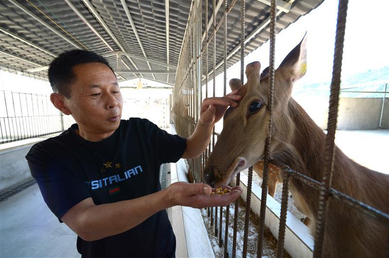 贵州江口:梅花鹿养殖助农增收
