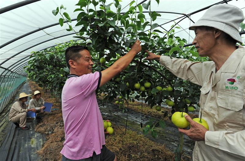 浙江:育种人员为果农送服务
