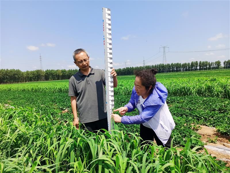 遼寧省阜蒙縣:建立花生與玉米、雜糧輪作的耕作制度