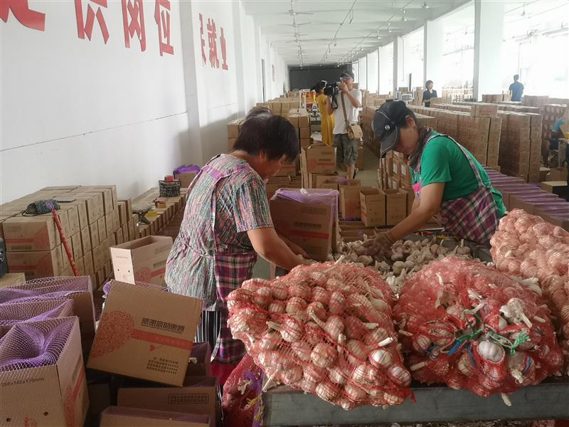 销售人员工资条_河南杞县:电商网撑起农产品上行路-中国农网