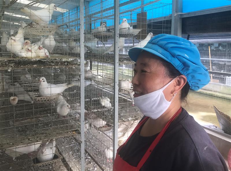 阜平硒鸽健康产业园