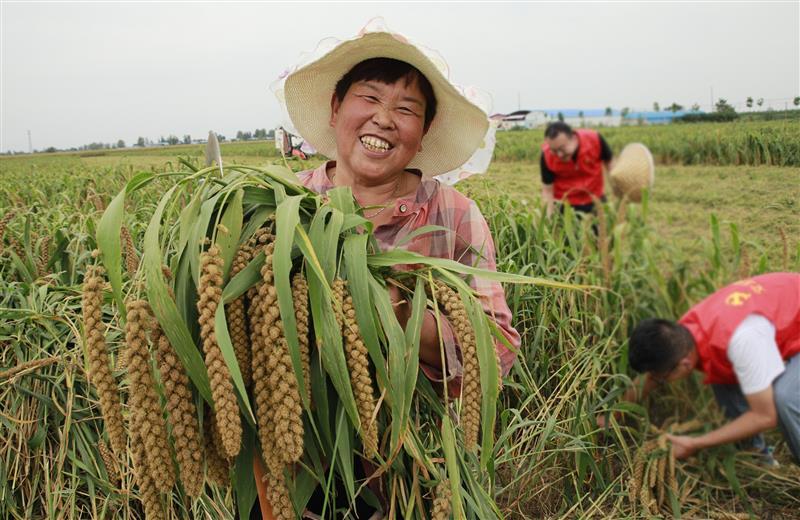 河南尉氏县:党员志愿者服务队助农收割