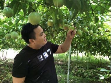 《2020年新农人调研报告》:模式创新+人才培育是拼多多农产品上行核心战略1329.png