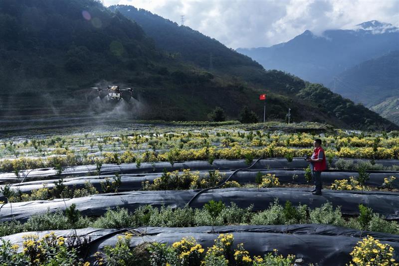 科技正在改变农业面貌