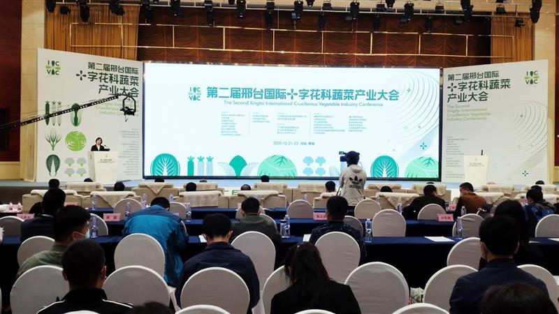 共建共享共乐,邢台国际十字花科蔬菜产业大会再度惊艳亮相