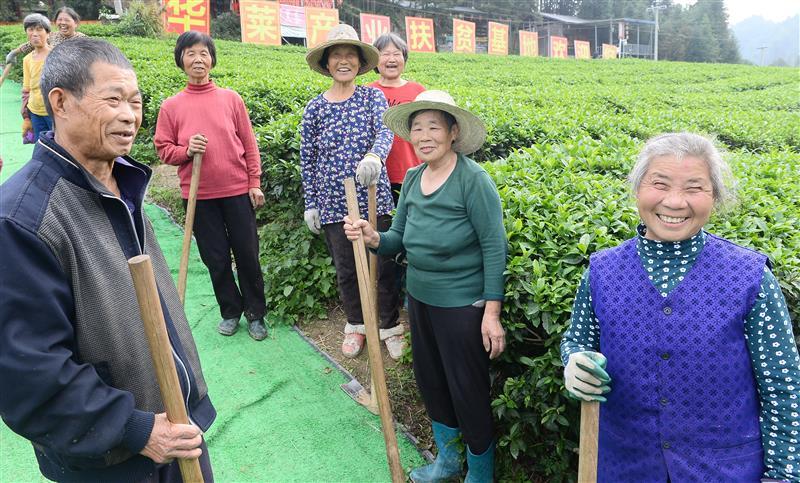 湖南安化:黑茶龍頭企業助力農戶脫貧致富
