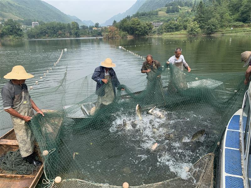 貴州省六盤水市:河長制促進生態養殖 助推脫貧增收