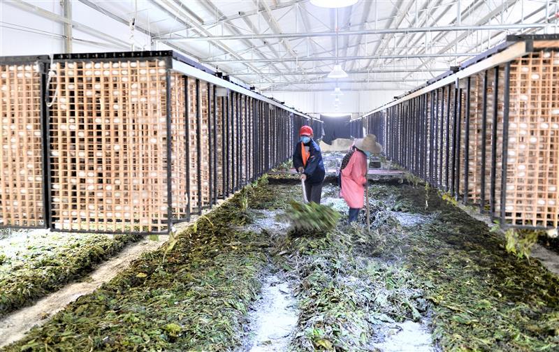 金寨县建立蚕桑产业扶贫基地