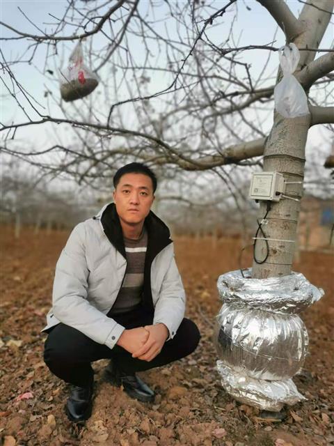 """介入种植端改良土壤,陕西果农种出""""数字化""""苹果"""
