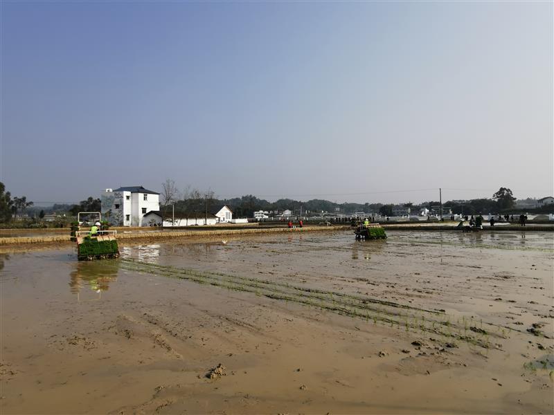 """重庆:智能农机助春耕 """"千年良田""""夺丰收"""