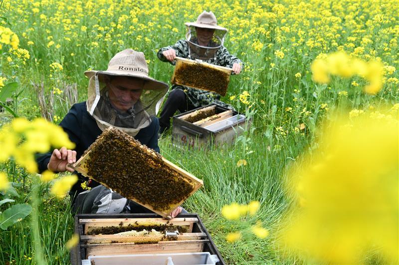甜蜜事业让农民尝到了甜头
