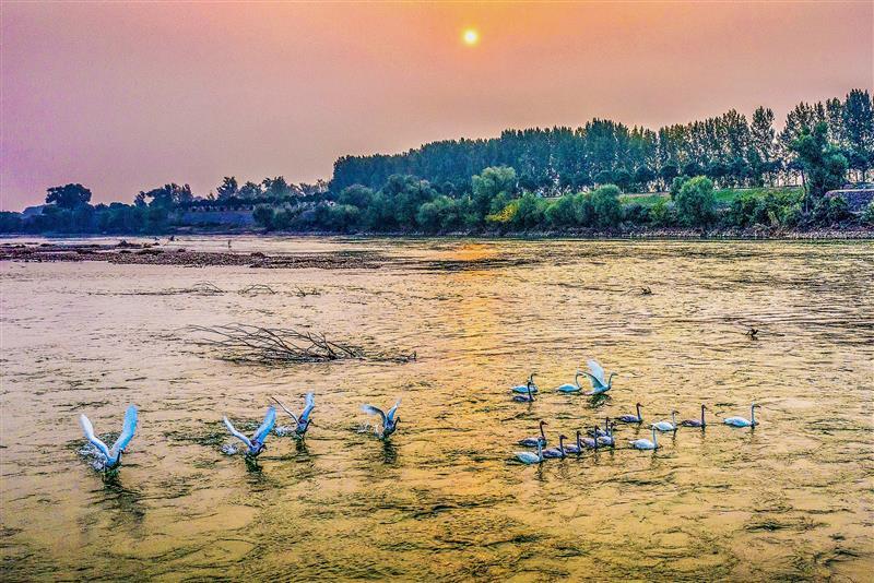 打造生態廊道 築牢黃(huang)河流(liu)域(yu)生態屏障