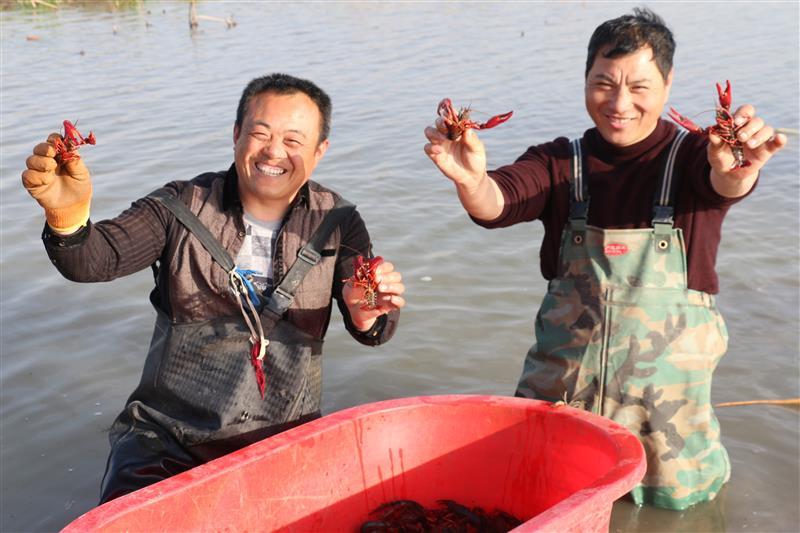 春日暖 捕虾忙