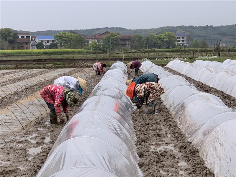湖南省株洲市攸县力抓春耕备耕和早稻生产工作