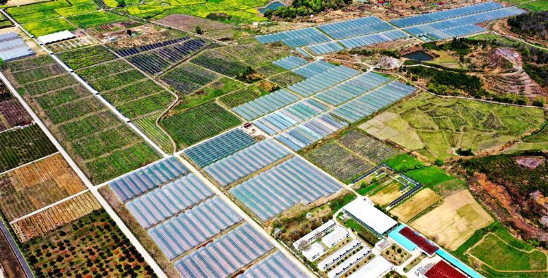 浙江仙居:大棚农业助增收