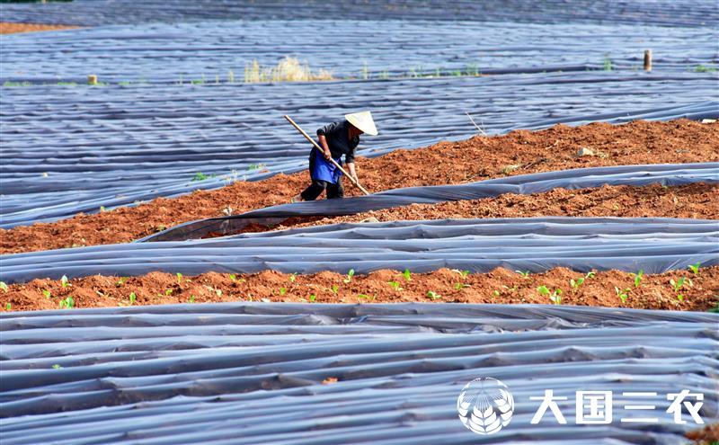 云南弥勒:春种管护忙 田园织锦绣