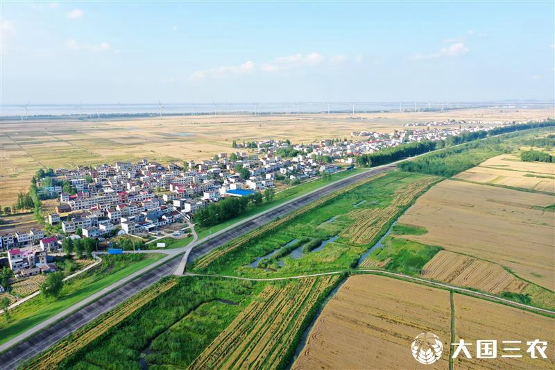 长江两岸麦飘香
