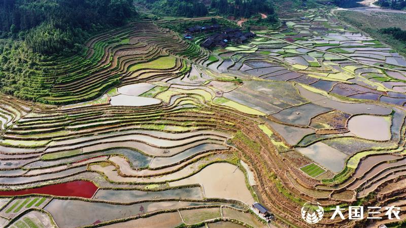 贵州从江:田园美如画