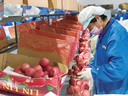苹果销售去库存,路在何方? ——来自苹果主产区山东烟台的调查报告