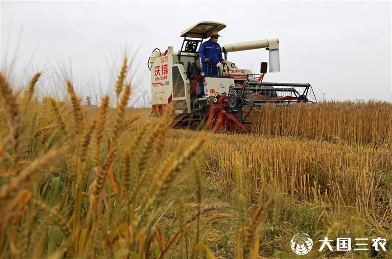 安徽省宿松县:小麦开镰抢雨前