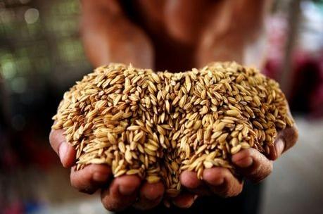 江蘇以綠色創建推動糧食生產高質高效
