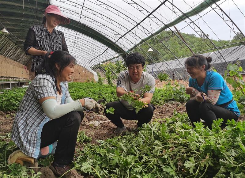 人才进村入户  农民增收致富