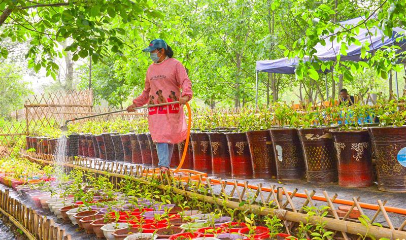 科技讓盆栽茶樹走進北方鄉村