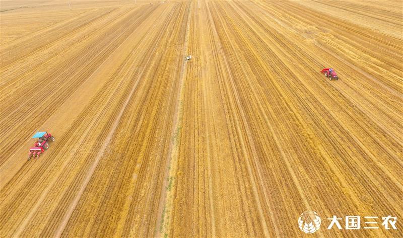 全国已收获小麦面积2.61亿亩 进度超八成