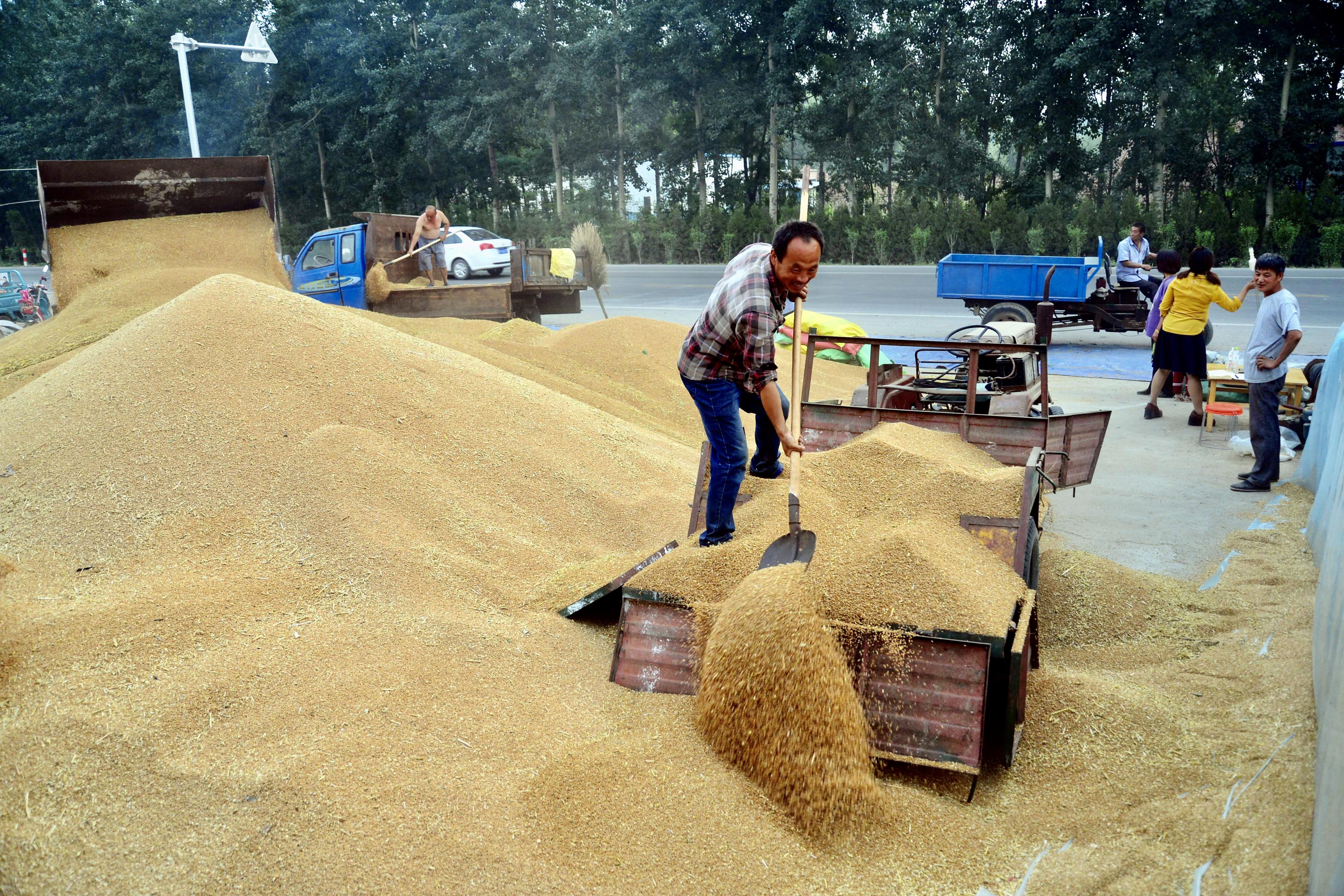 新麦质优价高  专业服务给力