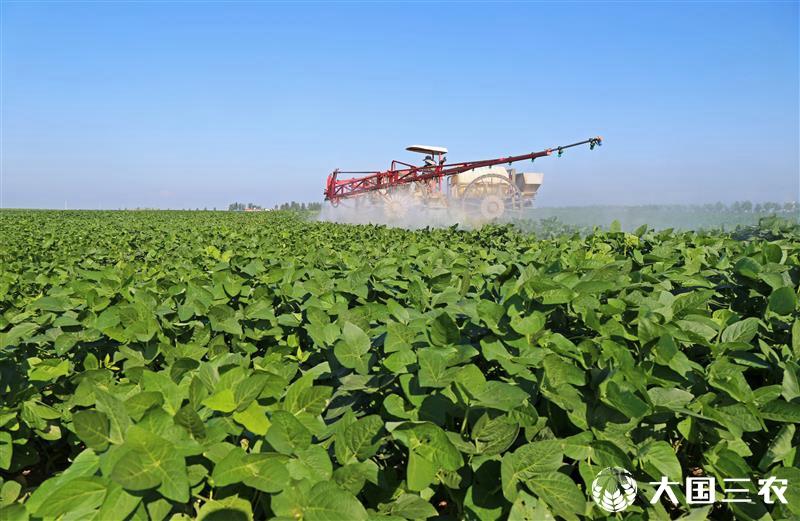 安徽宿松:雨后田管保增收