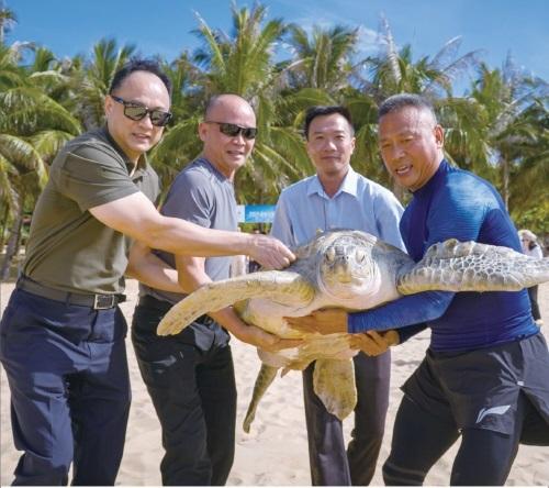 11只被救治康复海龟重归大海
