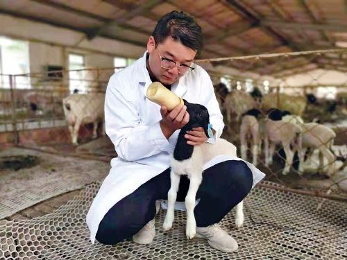 薛景霞:養羊致富反哺家鄉