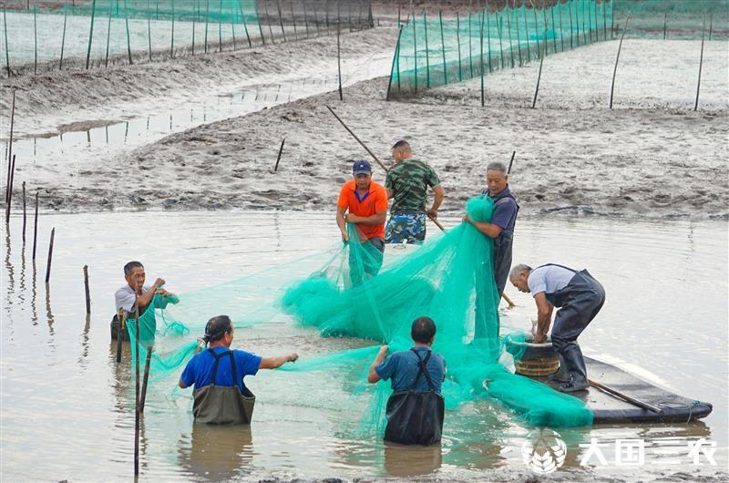 浙江三門:小白蝦帶動當地經濟發展