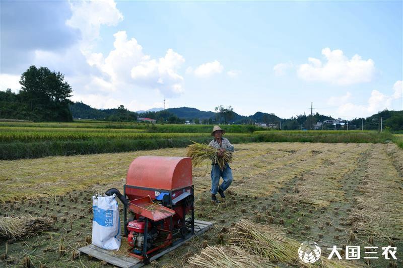 湖北通城:加大生態村建設 農民豐產又豐收