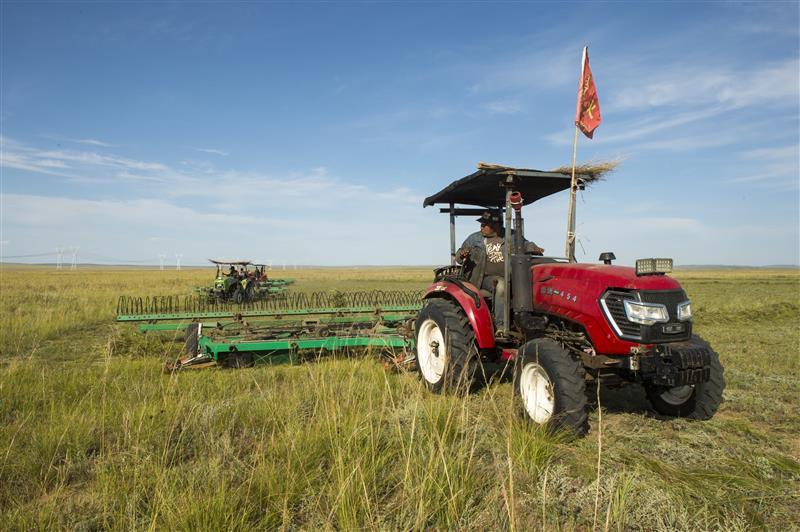 錫林郭勒草原上牧民打草忙