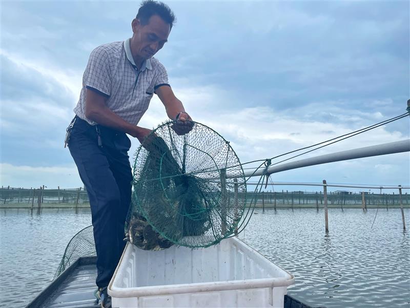 淘菜菜直采全国优质产区大闸蟹向全国社区供应