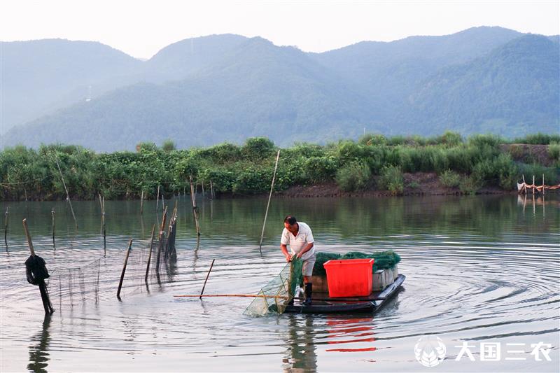 浙江台州:三门青蟹将大量供应市场