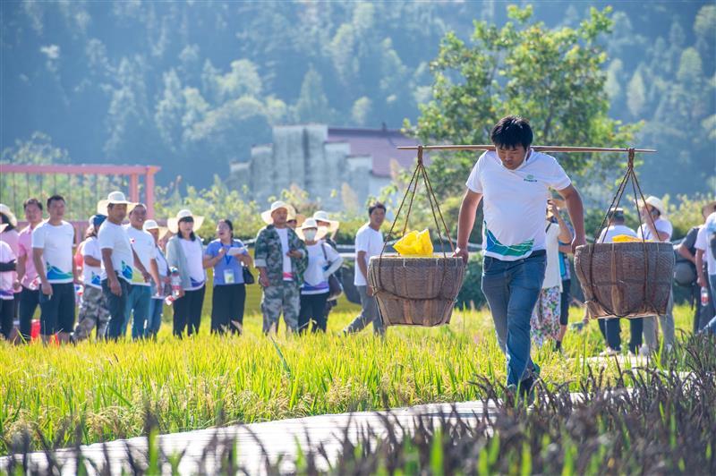 稻子开镰,农民乐享趣味运动会