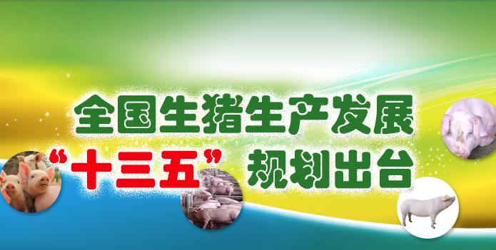 """全國生豬生產發展""""十三五""""規劃出臺"""