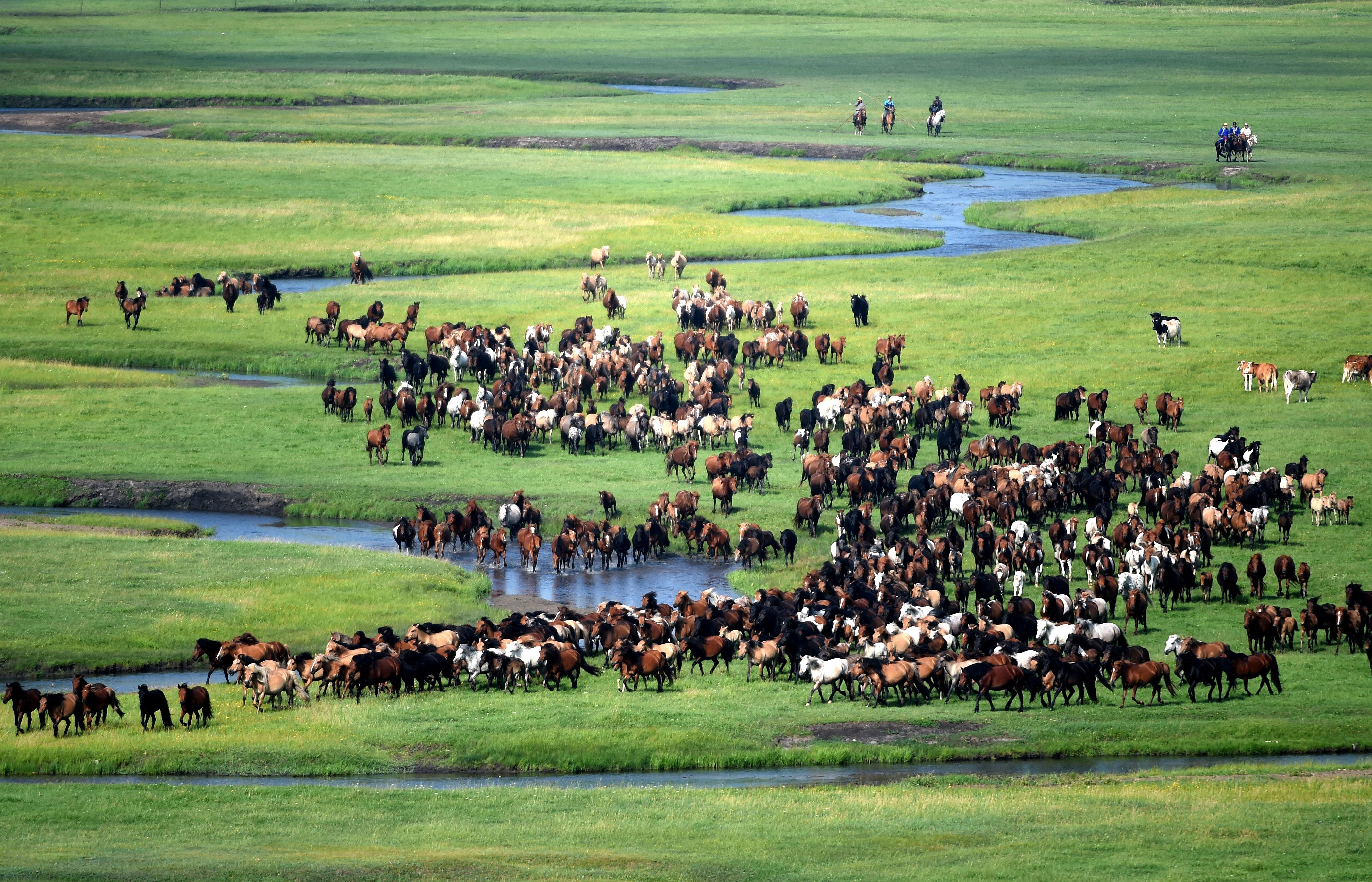 """7月20日,馬群在乃林高勒草原上奔馳。     盛夏的內蒙古東烏珠穆沁旗乃林高勒草原綠草如茵,氣候宜人。連日來,在""""四季烏珠穆沁""""馬文化主題活動上,牧人趕著馬群在綠色的草原上馳騁,氣勢磅礴,構成一道美麗的風景。     新華社記者 劉磊 攝"""