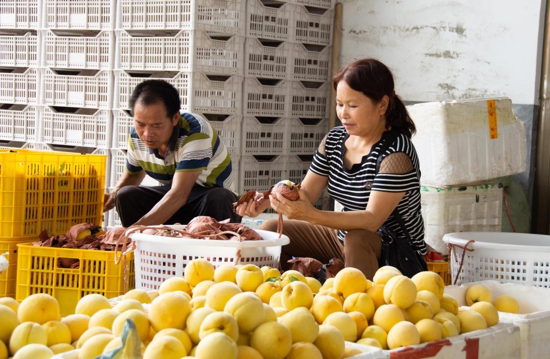 8月6日,湖南省炎陵县中村瑶族乡平乐村村民在分拣黄桃。新华社记者 柳王敏 摄