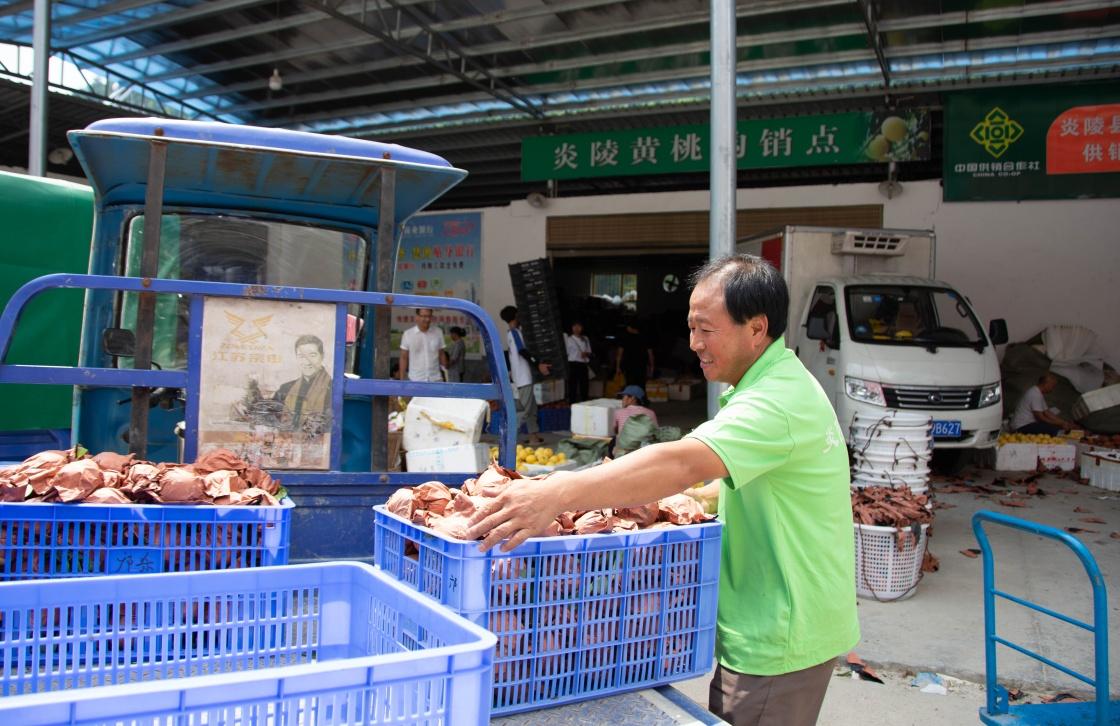 8月6日,湖南省炎陵县中村瑶族乡平乐村村民将采摘的黄桃搬运到购销点。新华社记者 柳王敏 摄